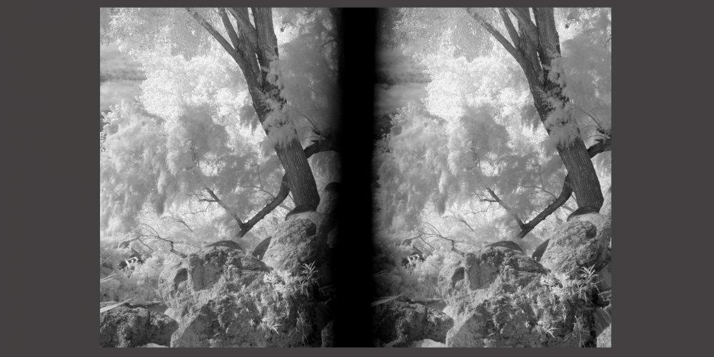 stereo card 3161.jpg
